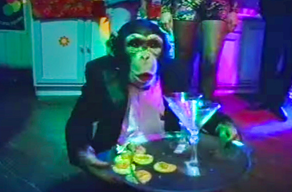 Dramarama music video Haven't Got A Clue directed by Rocky Schenck. Starring John Easdale, Clem Burke, Rodney Bingenheimer, and a monkey in a tuxedo carrying martinis.